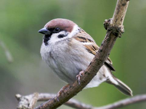 free-bible-studies-online-a-little-sparrow