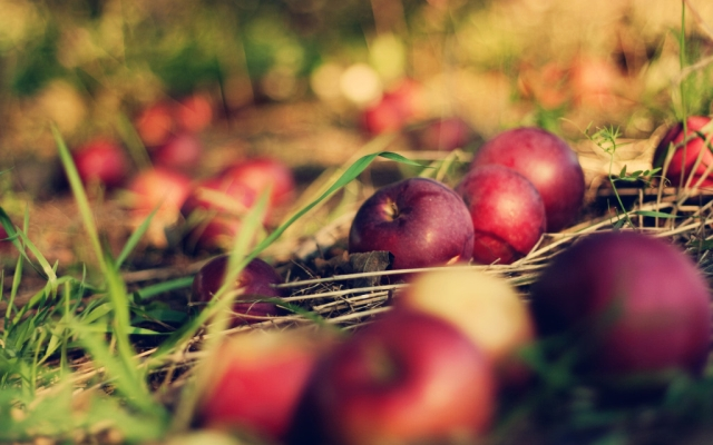 free-bible-studies-online-activated-of-orchards-and-gardens