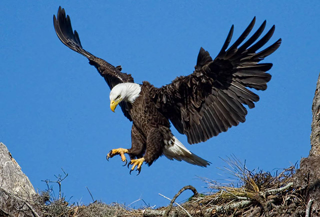 free-bible-studies-online-activated-chained-eagle